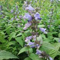 お茶花の自然観察のサムネイル