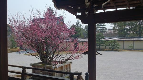 大覚寺の春