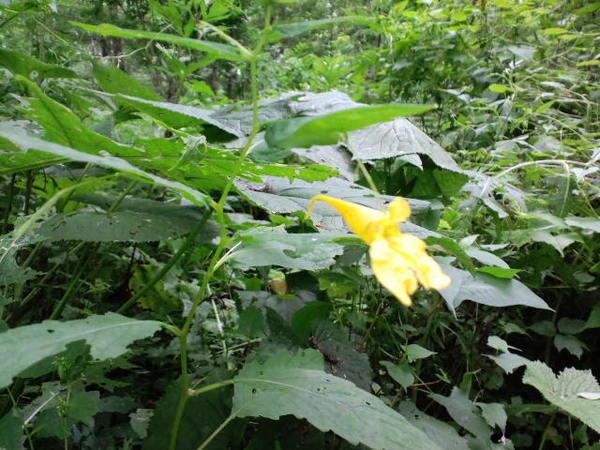 お茶花の自然観察